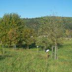 IRIS - Miniarboretum