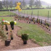 realizace-zahrad-5